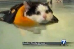 News Anchor Can't Get Through Fat Cat Story Without Cracking Up | Fat cats | Scoop.it