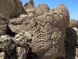 Nevada rock carvings may be oldest in North America | EarthSky.org | Freefire History | Scoop.it