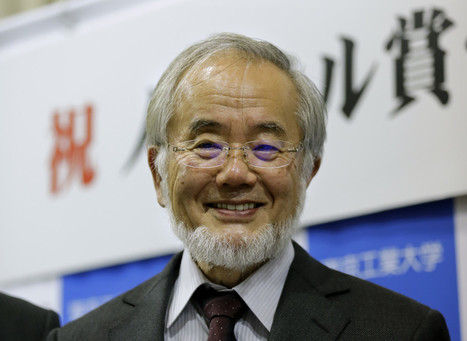 Yoshinori Ohsumi – a deserving winner of the Nobel Prize for physiology or medicine   SACE and IB Chemistry at PAC   Scoop.it
