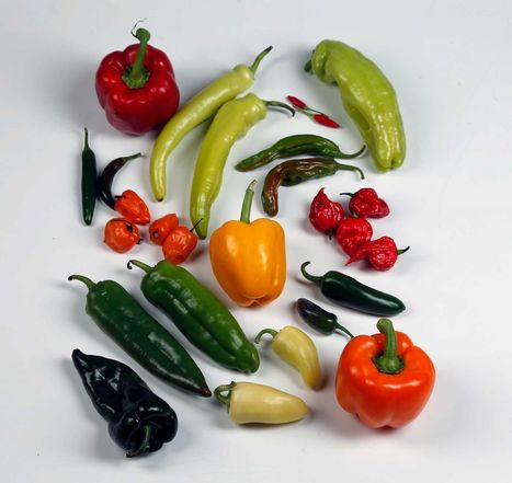 (EN) - Glossary of peppers with their Scoville heat units | Diane Cowen | Glossarissimo! | Scoop.it