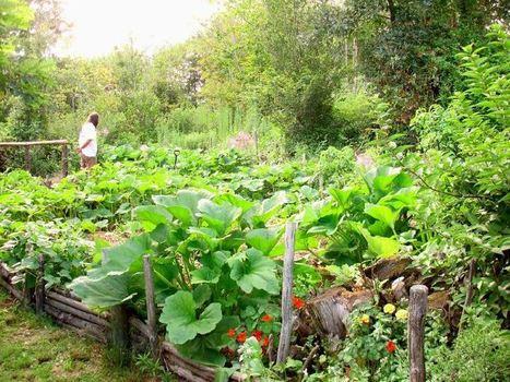 Permacultura y el mito de la escasez | Cultivos Hidropónicos | Scoop.it