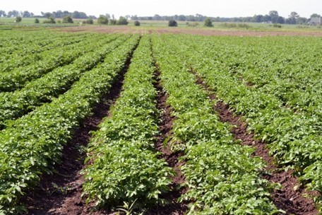 Global Warming Could Affect Crops Sooner Than We Thought | Sustain Our Earth | Scoop.it