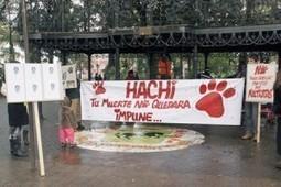 Informativo Animalista: Manifestación contra el maltrato animal se ... | Pablo Galgo | Scoop.it