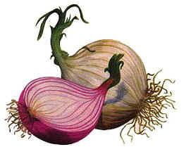 DISCOVERY DSALUD | Cebolla (Allium cepa) | Scoop.it