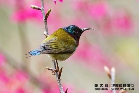 Top 25 Wild Bird Photographs of the Week #63 - National Geographic | Enjoying Photography as a Lucrative Hobby | Scoop.it