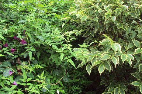 Gardening: Longing for a low-maintenance garden   Gardening   Scoop.it