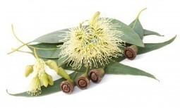 Mon aromatherapie Inhalation: un processus millénaire contre les affections ORL | Huiles essentielles HE | Scoop.it