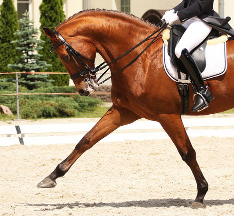 What is a Right of First Refusal and What are the Legal Implications | Equine Law | Scoop.it