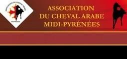 Fête du Cheval Arabe en Midi-Pyrénées les 4 et 5 mai 2013 | Equum.fr | Scoop.it