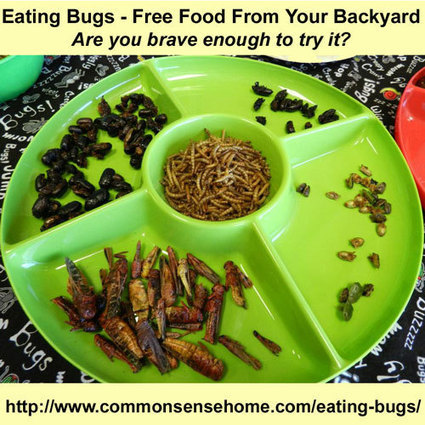 Eating Bugs - Free Food from Your Backyard | Using Digital Technologies to explore the world around us | Scoop.it