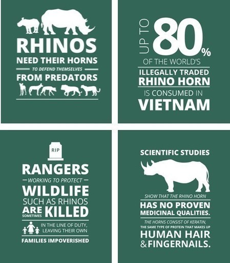 Every eight hours, another rhino is killed in South Africa. Here's why this affects all of us | Save our Rhino and all animals...this is what it looks like!!!!! | Scoop.it