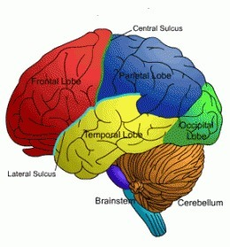 Religious factors may influence changes in the brain | Cognitive Science | Scoop.it