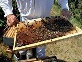 Regain d'intérêt pour l'apiculture dans la wilaya de Ghardaïa - APS : Algérie Presse Service | Abeilles, intoxications et informations | Scoop.it