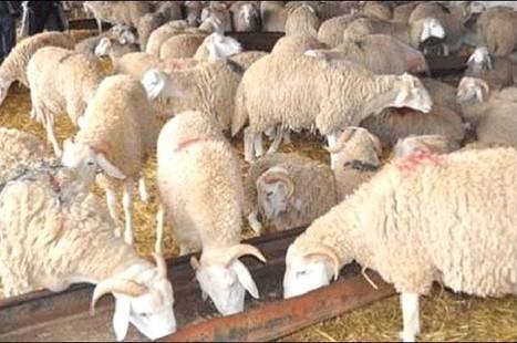 Plus de 30 propositions à remettre au ministère de l'Agriculture - Liberte-algerie.com | Agriculture et Alimentation méditerranéenne durable | Scoop.it
