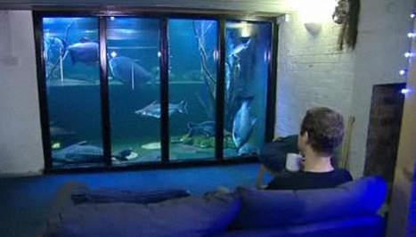 Le plus grand aquarium privé du monde dans une maison   Mais n'importe quoi !   Scoop.it