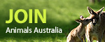 Call to ban full inversion slaughter boxes // Animals Australia | Nature Animals humankind | Scoop.it