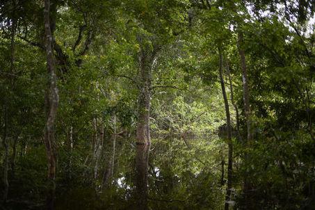 Les forêts du globe malades du réchauffement climatique | Sustainable imagination | Scoop.it