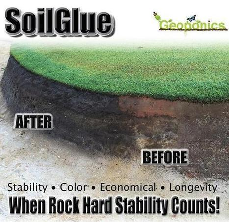 SoilGlue improves stability, color easing bunker maintenance - Geoponics Corporation | Turf Maintenance | Scoop.it