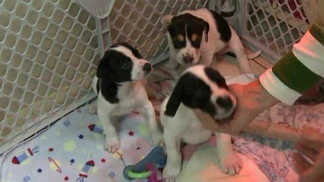 Puppies Rescued From Trash Bag Get A Second Chance | WNEP.com | puppy training | Scoop.it