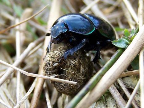 Le scarabée et l'artiste, par Wajdi Mouawad | politiques culturelles | Scoop.it
