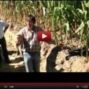 Vidéo avec Frédéric THOMAS sur la vie du sol en agriculture. | veille Lycée La touche Agriculture et Santé | Scoop.it