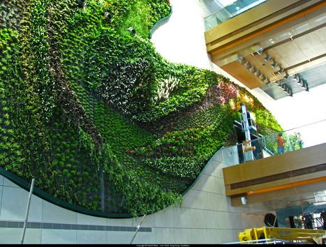 A vertical garden by Patrick Blanc | Art Installations, Sculpture, Contemporary Art | Scoop.it