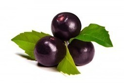 UNDER THE MICROSCOPE - What are Acai Berries? - MSC Nutrition   Expert nutrition and exercise blog   Scoop.it