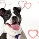 My Furry Valentine: 10 Ways to Show Pets Some Love   Pet News   Scoop.it