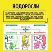 Infographic: Водоросли | infogr.am | Биология | Scoop.it