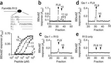 Nonclassical MHC class Ib-restricted cytotoxic T cells monitor antigen processing in the endoplasmic reticulum : Nature Immunology : Nature Publishing Group | Viruses and Bioinformatics from Virology.uvic.ca | Scoop.it