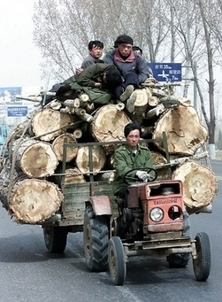 La moitié du bois exporté du Mozambique vers la Chine est illégal | Actualités Afrique | Scoop.it