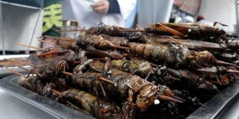 Manger des insectes, il va falloir s'y mettre ! | sustainable development | Scoop.it