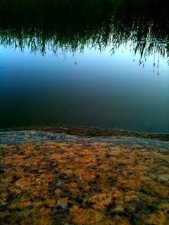 Reed seems to grow from heaven - Taivassalo, archipelago of Turku   Finland   Scoop.it