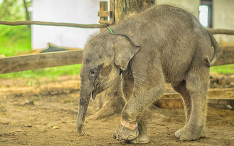 Christmas Appeal from Elephant Family | Animals - fact and fiction | Scoop.it