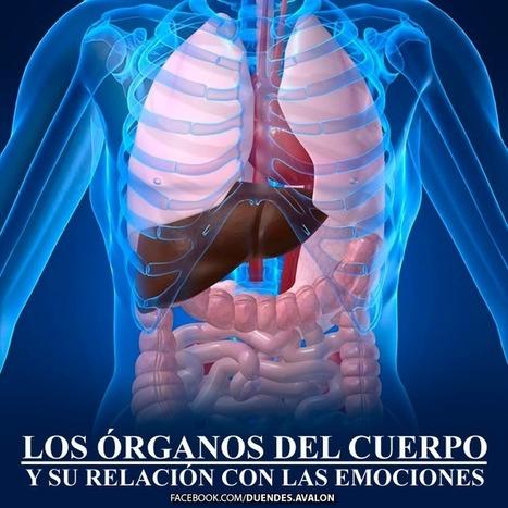 LOS ÓRGANOS DEL CUERPO Y SU RELACIÓN CON LAS EMOCIONES:   Salud   Scoop.it