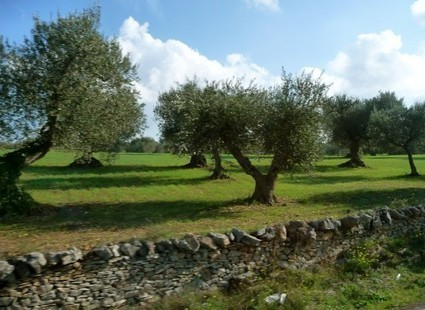 Travel to Puglia : The Who, What, Why and When | Travel | Scoop.it