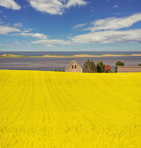 Shaun Lowe: Canola, Sunshine & The Sea | Hitchhiker | Scoop.it