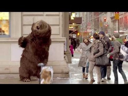 Hungry bear loose in NYC | staged | Scoop.it