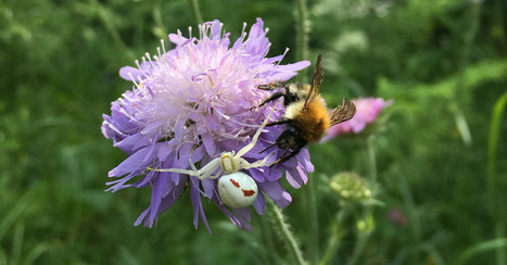 The Sweet Emotional Life of Bees | Biodiversité | Scoop.it