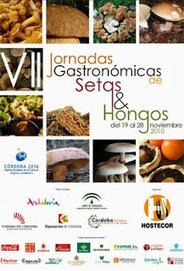 Recetas de Cocina y Reposteria!!!: Setas y Hongos - Recetario | #DIRCASA - El Buen Comer!!!! | Scoop.it