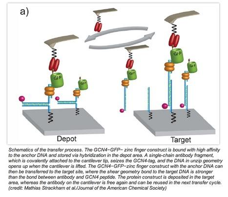 Precise Nanoscale Arrangement of Proteins by Single-Molecule Cut-and-Paste | Amazing Science | Scoop.it