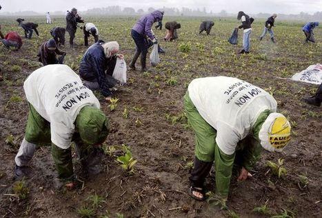 OGM : José Bové dénonce la vision «court-termiste» de l'UE | Green economic development and social changes | Scoop.it