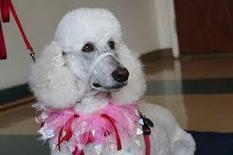 Xiglute | Xiglut - Blog View - The basic commands of dog training salt lake city | dog grooming utah | Scoop.it