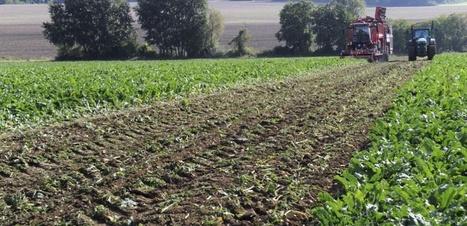 L'usage des -SCANDALEUX- agrocarburants encadré par l'Europe | Environnement et développement durable, mode de vie soutenable | Scoop.it