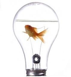 Para Innovar hay que Educar en el Error   Educa...   Tecnologias de la Información   Scoop.it