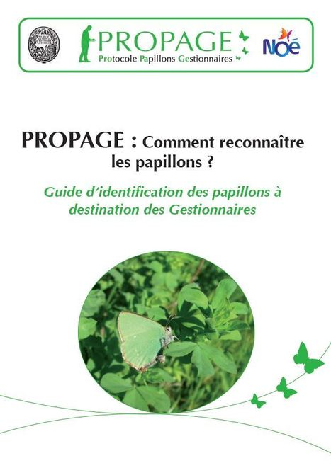 Guide d&rsquo;identification des papillons &agrave;<br/>destination des Gestionnaires | Insect Archive | Scoop.it