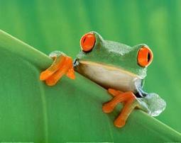16 mil especies en peligro de extinción en América | Noticias de ecologia y medio ambiente | Agua | Scoop.it