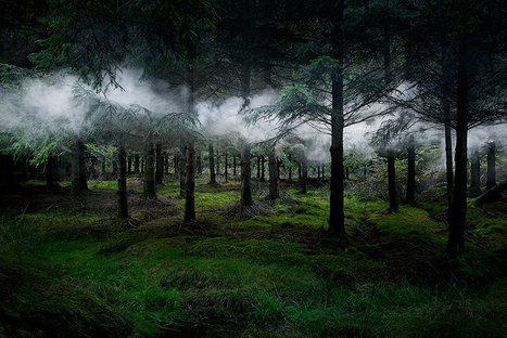 Artist Has Spent 7 Years Turning UK Forests Into Works Of Art | The Integral Landscape Café | Scoop.it