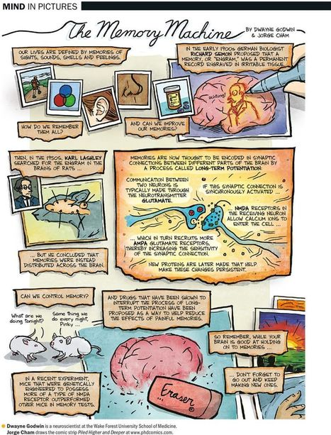 How the Brain Makes Memories | Sustain Our Earth | Scoop.it