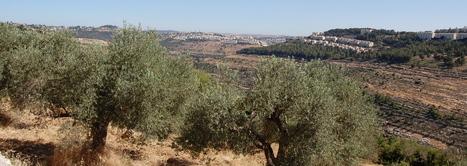 Crémisan: La Cour Suprême Israélienne approuve finalement la construction du mur   Echos des Eglises   Scoop.it